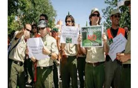 Tribunal constitucional da razon a forestales