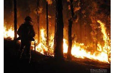 FeSP-UGT lamenta muerte agente forestal incendio La Palma