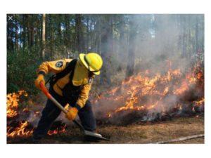 marco básico estatuto bomberos forestales