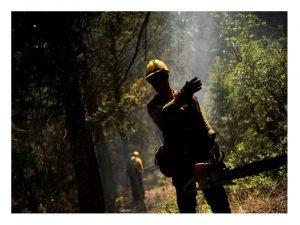 Semana fatídica sector forestal