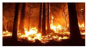 solidariza pueblo griego ante incendios